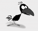Noisy Crow's Avatar